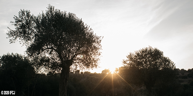 sunset at olive grove